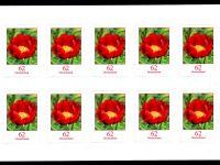 FBL 042 Blumen-Pfingstrose