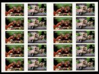 FBL 044 Tierkinder Eichhörnchen-Wildkatze